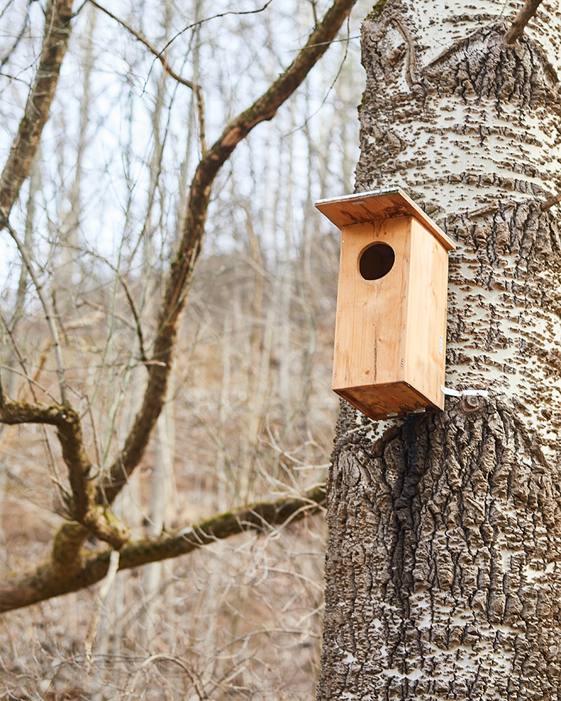nesting boxes by the riverside